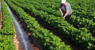 Sector agrario y agroalimentario puede solicitar ayudas económicas a través de Avalam