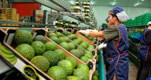 Sector agroalimentario murciano asistirá las principales ferias del mundo